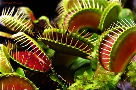 plantas-carnivoras-habitat-caracteristicas