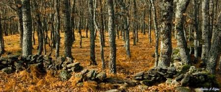 bosque al final de otoño